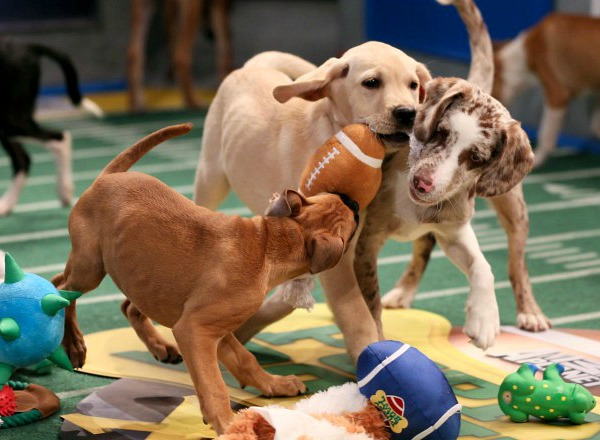 Puppy Bowl Super Bowl Half-time Show!
