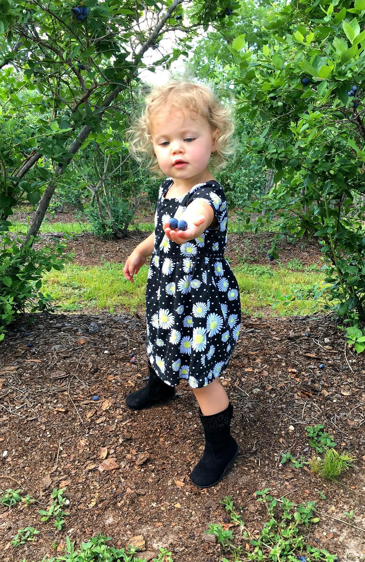 Family Fun: Blueberry Picking!
